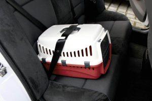 Kerbl Expedion Transportín de plástico acoplada a cinturón de coche