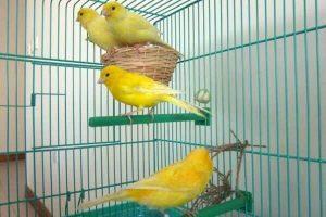 jaulas de cría para canarios